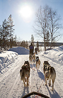 Sweden, SWE, Kiruna, 2008Mar24: A dogsledge ride with siberian huskies in winterly Lapland.