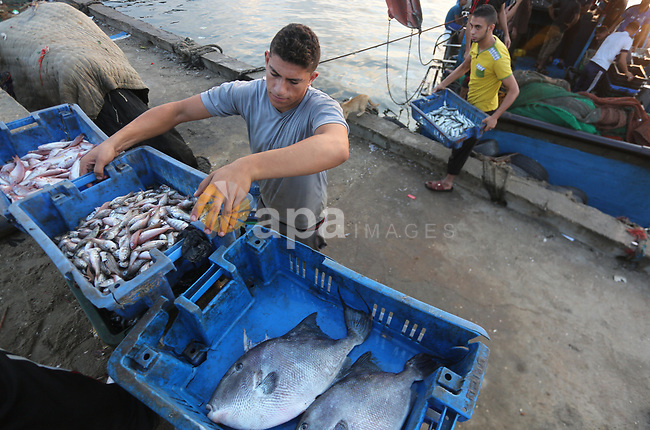 Palestinian fishermen display fish for sale, in Gaza seaport, on August 10, 2017. Photo by Mohammed Asad