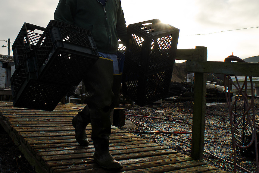A worker carries empty bins to fill with freshly harvested oysters at Drakes Bay Oyster Company in Inverness, Calif., on December 13, 2011. The federal contract under which the Drakes Bay Oyster Company operates has recently expired. Now the Department of the Interior must decide whether or not to allow the sustainable oyster farm to continue commercial operations in a federally designated marine wilderness. (Alvin Jornada / Special to The Chronicle)