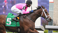 Delegation (no. 5), ridden by Patrick Husbands and trained by Mark Casse, wins the grade 3 Durham Cup Stakes for three year olds and upward on October 14, 2012 at Woodbine Racetrack in Rexdale, Ontario, Canada.  (Bob Mayberger/Eclipse Sportswire)
