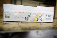 A box of Irodori heavenly bamboo leaves at the agricultural cooperative, Kamikatsu, Katsuura, Tokushima Prefecture, Japan, July 7, 2014. The Irodori Project is based in the mountain town of Kamikatsu, Tokushima Prefecture. Farmers - many of them elderly - grow leaves and flowers to use to decorate Japanese food in restaurants and hotels across the nation.