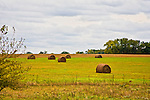 Round hay bales are scattered in a field in Kansas.
