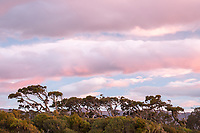 Coastal vegetation at sunset near Haast, UNESCO World Heritage Area, South Westland, New Zealand, NZ