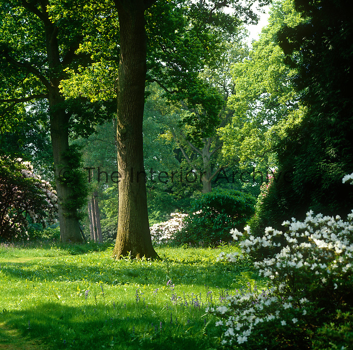 The idyllic woodland garden of Ramster, nestled in the Surrey countryside
