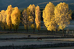Autumn colors in the farmland of the  Sierra de Gredos mountains,Avila, Spain