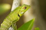 Reptiles - Reptilien