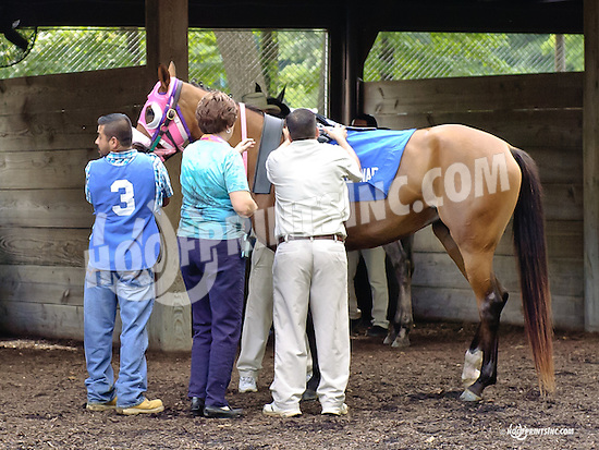 Top Thess before The Cre Run Oaks (gr 2) at Delaware Park on 9/1/14