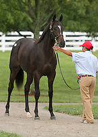 Hip #28 Street Cry - Storm Beauty filly at the  Keeneland September Yearling Sale.  September 9, 2012.