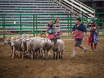 Mutton Bustin' clowns, Opening day of the 80th Amador County Fair, Plymouth, Calif.<br /> <br /> Mutton Bustin' preliminary<br /> .<br /> .<br /> .<br /> .<br /> #AmadorCountyFair, #1SmallCounty Fair, #PlymouthCalifornia, #TourAmador, #VisitAmador