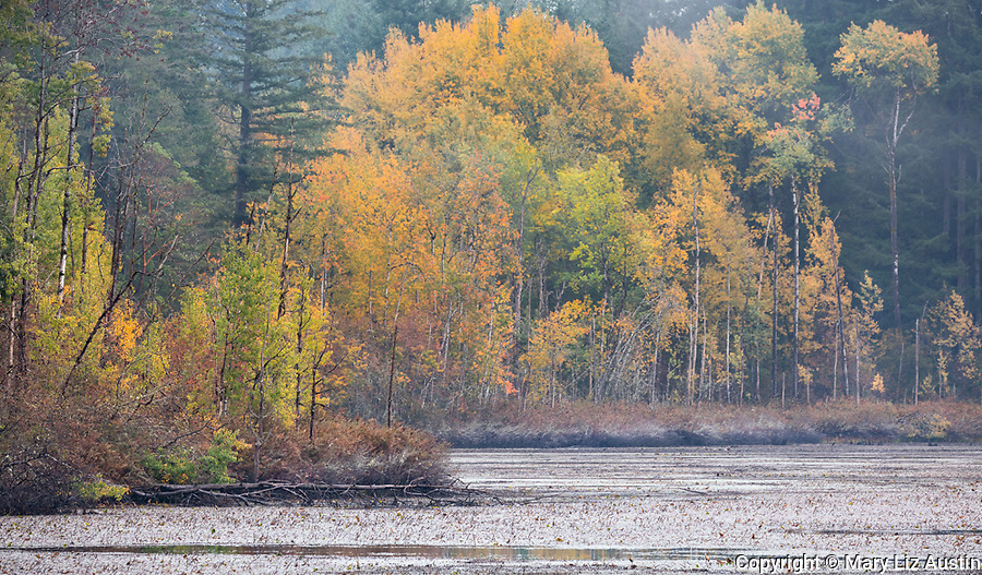 Vashon Island, Washington: Fisher Pond with fall trees along the shoreline