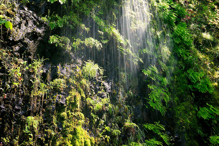 A wet wall on the Horsetail Falls Trail (# 438), Columbia River Gorge National Scenic Area, Oregon