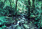 Creek in El Yunque rainforest in December
