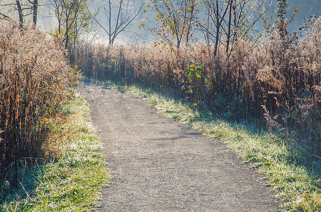 A hikingbtrail leads in to the morning sun at Oldfield Oaks Forest Preserve, DuPage County, Illinois
