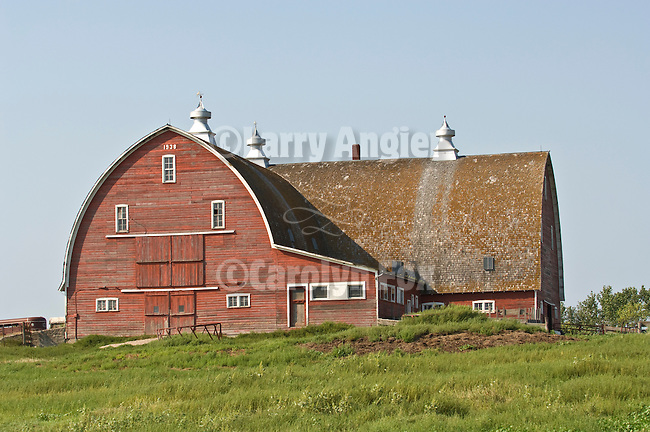 Red wooden barn with cupola ventilators, curved roof and second wing in North Dakota.