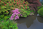 Seattle, WA<br /> Kubota Garden city park, flowering rhododendron and maples on the edge of a pond on Mapes Creek