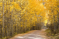 Forest road near North Clear Creek Falls, Colorado<br /> <br /> Canon EOS 5D, 24-105L lens