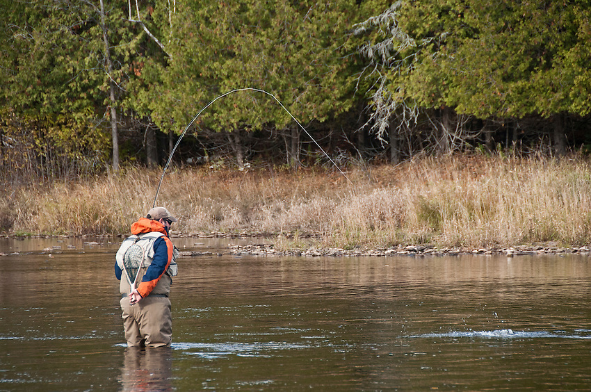 Landing a rainbow trout while fly fishing the Escanaba River near Boney Falls Dam Michigans Upper Peninsula.