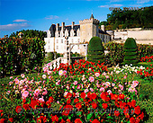 Tom Mackie, FLOWERS, photos, Chateau Villandry & Garden, Loire Valley, France, GBTM200288-2,#F# Garten, jardín