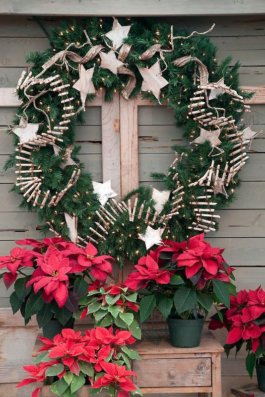 Poinsettias and wreath.
