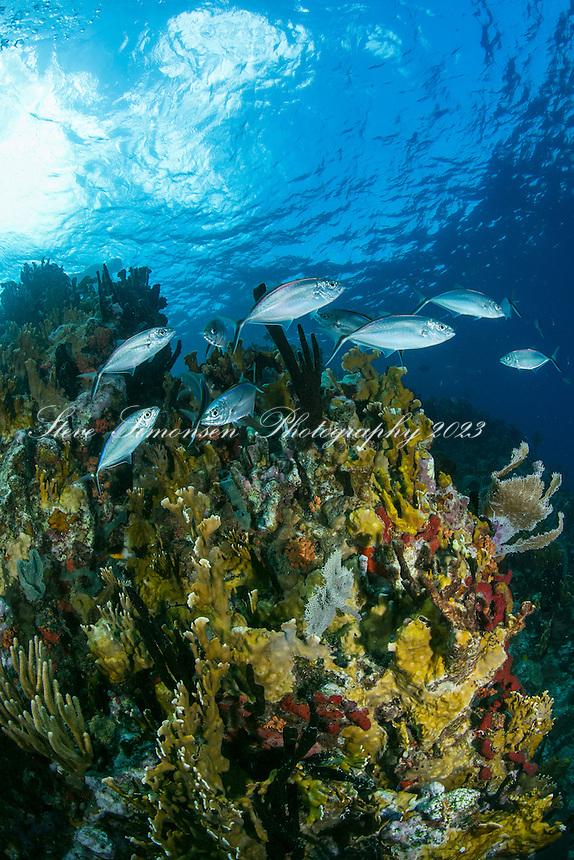 Underwater at The Indians<br /> British Virgin Islands