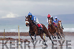 Sandy Cove, with Niall Maguire aboard, leads on the final bend to win the 2nd race of the day at Ballyheigue beach races last Sunday Dec 27th.