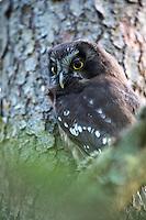Owls finland