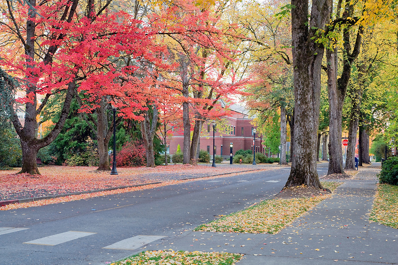 Road through campus with fall color. Oregon State University.