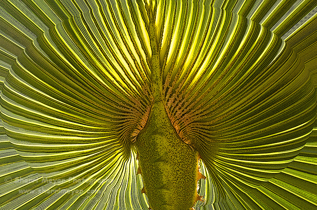 Digital Art Close-up of a backlit Palm frond,Cabo San Lucas, Baja California, Mexico, created from a original photograph