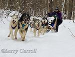 Dog Sled Racing