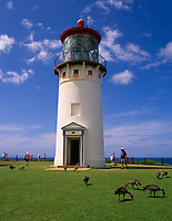 Kilauea Lighthouse & Hawaiian Nene Geese, Kauai, Hawaii, USA.