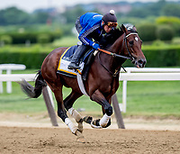 ELMONT, NY - JUNE 07: Blended Citizen prepares Thursday for the 150th running of the Belmont Stakes at Belmont Park on June 7, 2018 in Elmont, New York. (Photo by Scott Serio/Eclipse Sportswire/Getty Images)