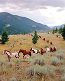 USA, Montana, scenic view of horses running out to pasture, Gallatin National Forest, Emigrant