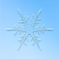 Snowflakes - Stellar Dendrites