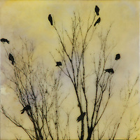 Encaustic photography  - Family tree with crows. SOLD