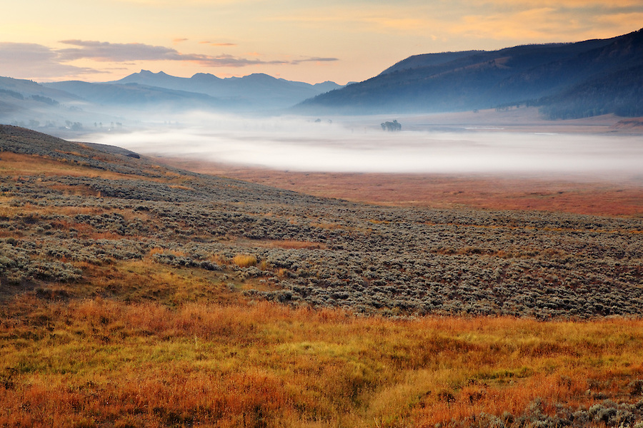 Meadows of Lamar Valley on a foggy fall morning, Yellowstone National Park, Wyoming, USA