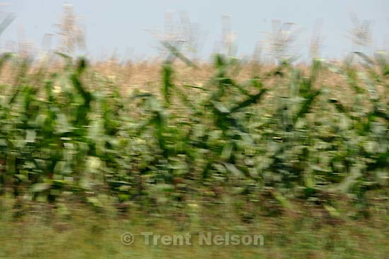 corn. Photos out the window as we drive from Boise to Parma, Idaho. 8.18.2004<br />