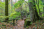 A Foot Path With Wooden Hand Rails And Steps Along The Little Miami River At Clifton Gorge On A Rainy Autumn Day, Clifton Ohio, USA