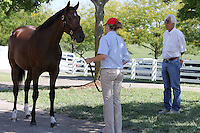 Hip #125 A.P. Indy - Miraculous Miss filly being inspected by trainer Bob Baffert at the  Keeneland September Yearling Sale.  September 9, 2012.