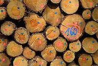 Fichtenholzstapel: EUROPA, DEUTSCHLAND, HAMBURG, (EUROPE, GERMANY), 01.04.2014: Fichtenholzstapel in einem Hamburger Staatsforst geschnitten, gestapelt und markiert.