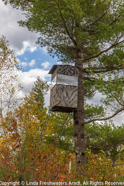 Homemade hunting blind in a white pine in northern Wisconsin.