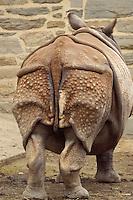 Indian Rhinoceros; zoo