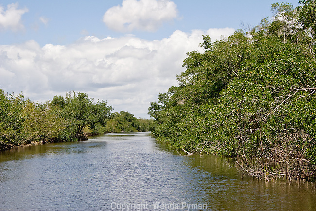 Tarpon Creek, a brackish waterway, is a  seldom fished  creek.