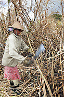 Mauritius, Flacq, near Centre de Flacq: local women cutting down sugar cane | Mauritius, Flacq, bei Centre de Flacq: Frauenarbeit - Zuckerrohrernte