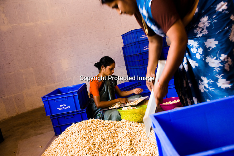 Women are seen shelling and polishing the raw cashews in cashew processing factory in Prassala, Kanyakumari district in Tamil Nadu, India.. .An estimated number of 500,000 women process cashews for a living in Tamil Nadu and Kerela. 2 million people are employed by cashew industry across India making it the world's biggest exporter of shelled cashews. .The working conditions in these processing units are way below industry standards and violates the basic rights. Wages are as low as Rs. 50 (US $1) per day. The problems for these women is not restricted to low wages. Many women are being injured by their jobs as the factory owners cut corners with health and safety. Oil released during the cashew shelling process is highly caustic, leading to common cases of dermatitis, blistering and discolouration of workers' skin. Women working in these units suffer from pains in their leg muscles, backs and knee joints after squatting positions on mud or concrete floors. It is very rare to find tables and chairs provided on shelling duty..Cashew workers' main concern is to increase their earnings and provide better working conditions. .Photo: Sanjit Das