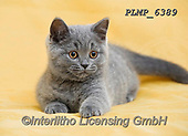 Marek, ANIMALS, REALISTISCHE TIERE, ANIMALES REALISTICOS, cats, photos+++++,PLMP6389,#a#, EVERYDAY