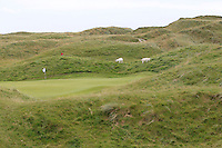 The Lahinch goats during the Quarter Finals of The South of Ireland in Lahinch Golf Club on Tuesday 29th July 2014.<br /> Picture:  Thos Caffrey / www.golffile.ie