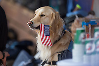 "The North Carolina Tar Heels bat dog ""Remington"" holds an American Flag in his mouth during the National Anthem prior to the 2017 ACC Baseball Championship Game against the Florida State Seminoles at Louisville Slugger Field on May 28, 2017 in Louisville, Kentucky.  The Seminoles defeated the Tar Heels 7-3.  (Brian Westerholt/Four Seam Images)"