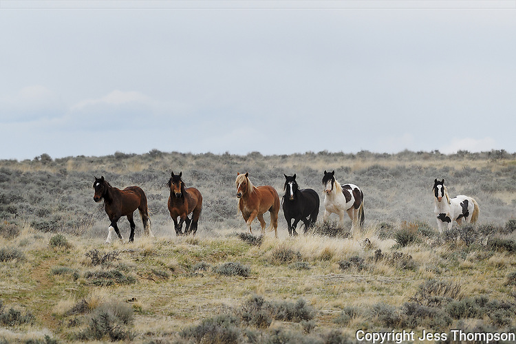 Wild Horses, McCullough Peaks, Wyoming