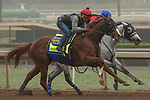 ARCADIA, CA. OCTOBER 29: Martin Garcia and Solomini record their final work before the Breeders' Cup on October 29, 2017, at Santa Anita Park in Arcadia, CA. (Photo by Casey Phillips/Eclipse Sportswire/Getty Images)