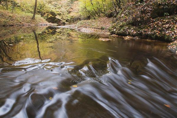 Stream early fall, Raven Rock State Park, Lillington, North Carolina, USA
